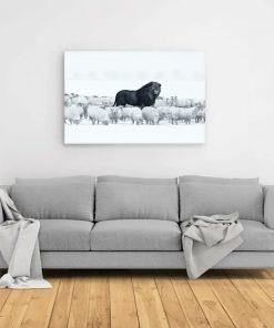 Lion amongst sheep canvas 1