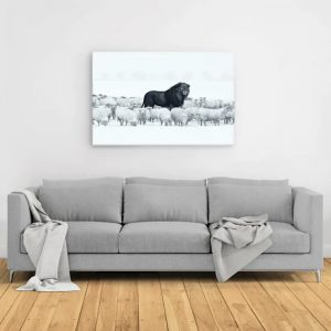 Lion amongst sheep canvas 1